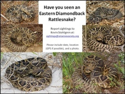 Eastern diamondback rattlesnake photo montage