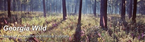 GaWild Masthead: longleaf pine forest