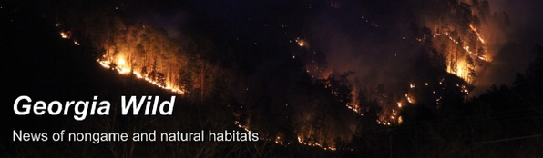Ga. Wild masthead: Tallulah Gorge burn at night