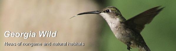 GaWild masthead: Hummingbird