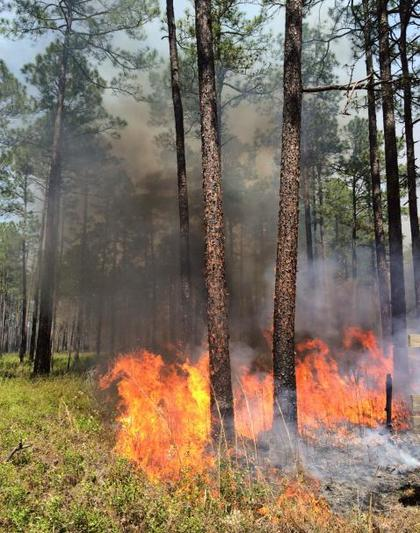 Williams Bluffs prescribed fire