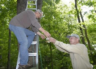Helping put hawks in nest platform. (Pete Pattavina)