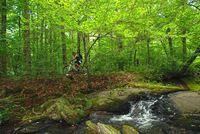 Hard Labor Creek Mountain Biking
