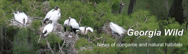 Ga. Wild Masthead: wood stork colony