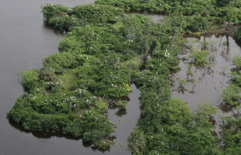 Aerial of wood stork colony