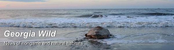 Ga. Wild masthead: Loggerhead in surf