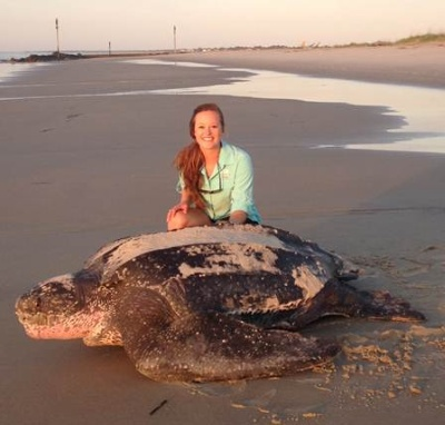 Morning nesting leatherback sea turtle.