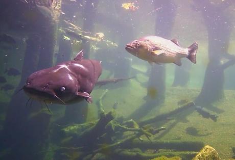 Go Fish cam