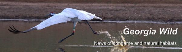 Ga. Wild masthead: whooping crane