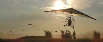 Whooping cranes ultralight-led flight. Operation Migration