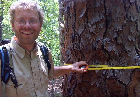 Biologist with old montane longleaf at Sprewell Bluff.