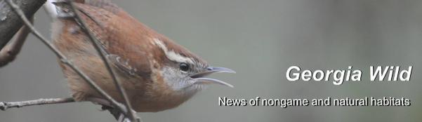 Georgia Wild masthead: Carolina wren