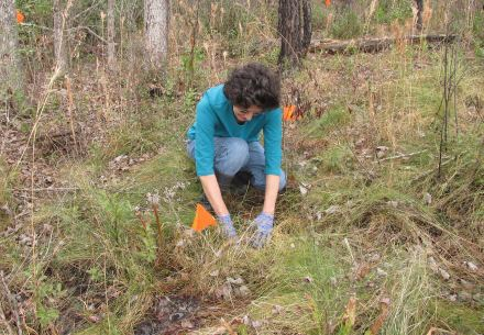 Planting in Coastal Plain bog