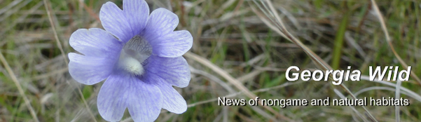 GaWildMasthead: Blue Butterwort