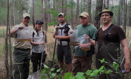 Frosted flatwoods salamander larvae found at Fort Stewart