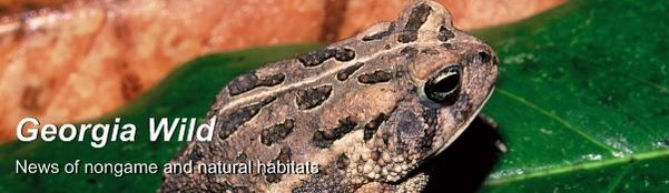 Ga Wild masthead: Fowler's toad