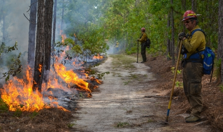 Prescribed fire in Taylor County
