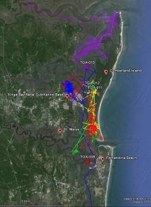 Manatee tracking map