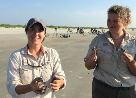 Little St. Simons sea turtle workers with hatchlings