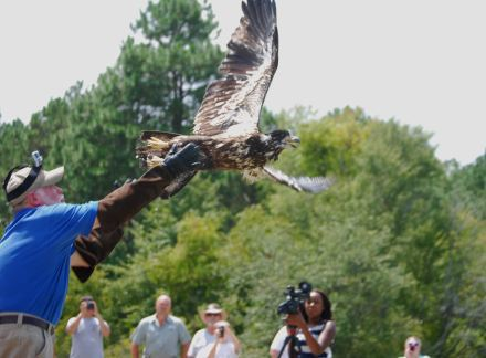 Dnr updates see eagle release in paradise for Renew ga fishing license