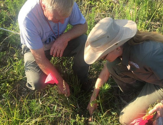 DNR's Hal Massie and Lisa Kruse monitor blackbland prairie restoration
