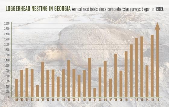Sea turtle nesting chart