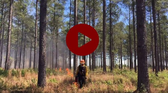 Prescribed fire video still