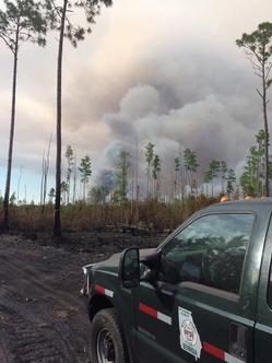 Okefenokee fire