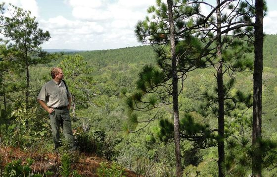 Nathan Klaus on longleaf bluff