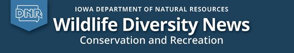 Wildlife Diversity News masthead