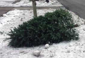 Tree pick-up