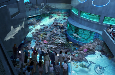 image of visitors enjoying the black tip reef exhibit