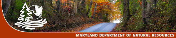 Banner: Fall Foliage
