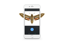 Photo of: Moth on phone screen
