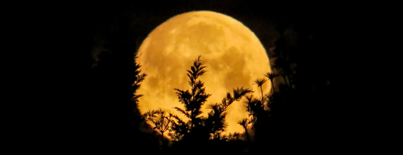 Photo of: Full moon