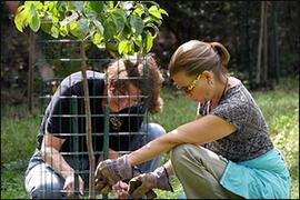 Photo of volunteers planting tree