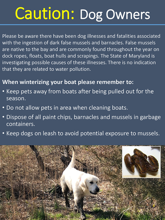 Poster cautioning dog owners of mussels