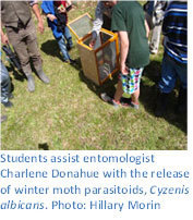 Students assist entomologist Charlene Donahue with the release of winter moth parasitoids, Cyzenis albicans. Photo: Hillary Morin