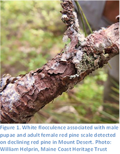 White Flocculence