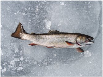Monthly review from the maine dept of inland fisheries for Maine fish wildlife