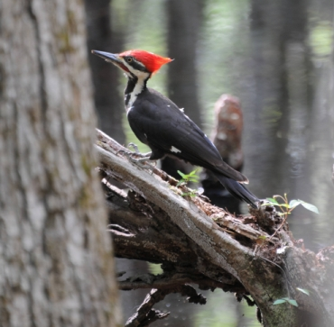 Now Thats A Woodpecker