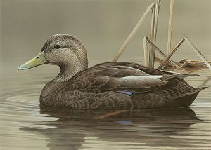 2013 duck stamp