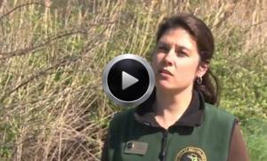 Wolf Lake State Fish Hatchery video