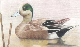 2013 junior duck stamp winner