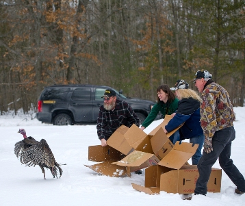 Michigan Wild Turkey Hunters Association members release turkeys in Lake County.