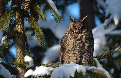 Owl Prowls offer the chance to see a live wild owl