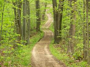Dirt trail through the bright green forest at Van Buren State Park Trail