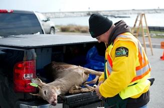deer check station in Michigan