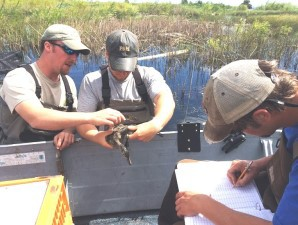 DNR duck banding showcased on 'Discovering'