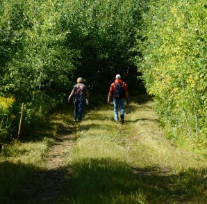 People walking on GEMS trail, an old logging road